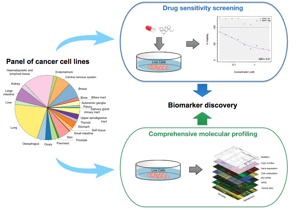 The Bioconductor 2018 Workshop Compilation 01twinchargertheoryturbocharger Layout Diagram Schematic View Of Drug Sensitivity Datasets